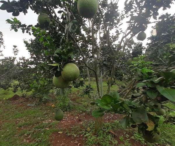 B066 - Bán nhà vườn đẹp 10830m2 có giếng phun, ao, vườn trái cây xum xuê, giá 10 tỷ tại Xà Bang, Châu Đức, BRVT