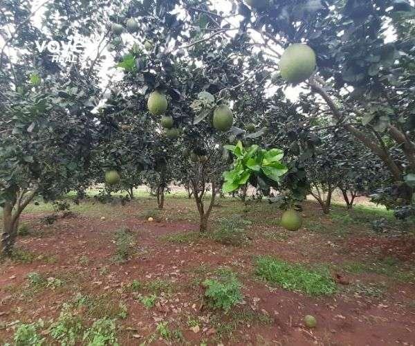 B066 - Bán vườn trái cây có giếng phun 10830m2, giá 9 tỷ tại Xà Bang, Châu Đức, BRVT   0988118579