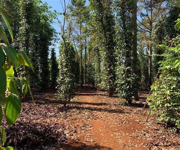 B080 - Bán nhà vườn đẹp11228m2 có 300m2 thổ cư và 32m mặt tiền đường nhựa Láng Lớn, Châu Đức, BRVT giá 9 tỷ