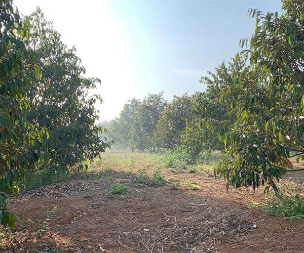 B082 - Bán vườn sầu riêng, bơ, bưởi 23358m3… 300m2 thổ cư giá 12,8 tỷ tại Xà Bang, Châu Đức, BRVT