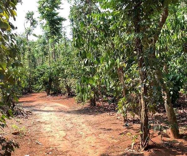 B112 - Bán đất đang trồng cây lâu năm 7103m2, có 50m mặt tiền giá 6.4 tỷ, tại Kim Long Châu Đức, BRVT | VOVEREAL