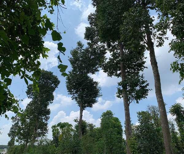 B128 - [NGHĨ DƯỠNG VIP] Bán vườn trái cây đủ loại 10000m2 ven suối lớn nước quanh năm, đối diện khu du lịch GreenFarm nổi tiếng, mặt tiền đượng nhựa rất dài 150m, điện 3 pha, 100m2 thổ cư giá 14 tỷ tại Láng Lớn, Châu Đức, BRVT