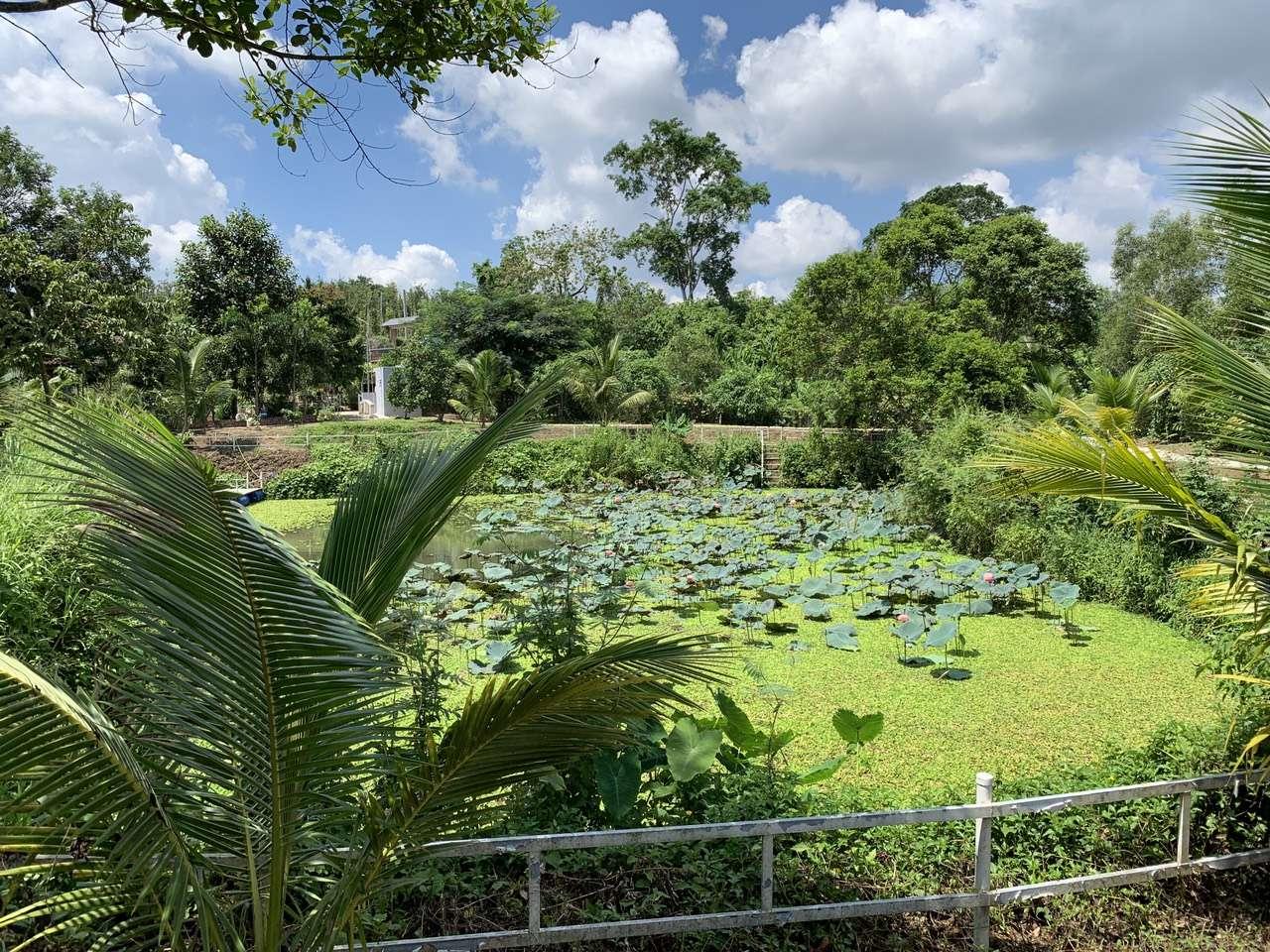 B133 - [NGHĨ DƯỠNG VIP] Bán nhà vườn 5167m2 view đã tạo ao sen, hồ cá rất đẹp, có 200m2 thổ cư, suối nước bao quanh, vườn trái cây xum xuê nhiều bóng mát một nơi tuyệt vời để nghĩ dưỡng giá 15.5 tỷ tại Trung tâm thị trấn Ngãi Giao, Châu Đức, BRVT
