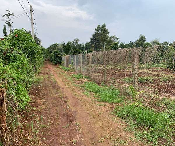 B142 - [ NGHỈ DƯỠNG] Bán đất vườn vuông vức, bằng phẳng 5,7 sào hơn 60m mặt tiền, cách QL56 chỉ 1,5km, chất đất đỏ bazan nằm trong khu dân cư đông đúc nhiều nhà vườn đẹp giá 4,85 tỷ tại Xà Bang, Châu Đức, BRVT