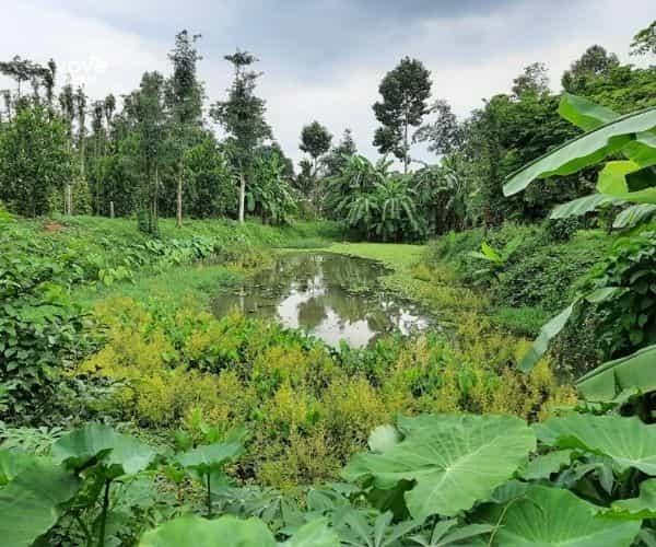 Bán 6100m2 vườn cây đủ loại có sẵn nhà, ao, suối.. tại xã Bàu Chinh, Châu Đức, Bà Rịa - Vũng Tàu