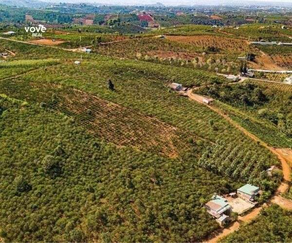 Bán các khu vườn gần Bảo Lộc, giá chỉ 320tr, view đỉnh hồ, núi, đồi cafe, chè tại cao nguyên Di Linh
