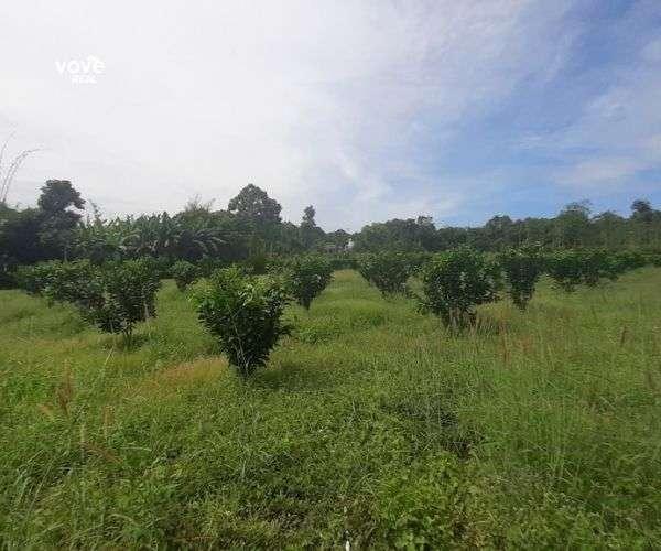 Bán miếng đất 1,37 ha, giá tốt 6,846 tỷ tại khu vực xã Bàu Chinh, Châu Đức, BRVT