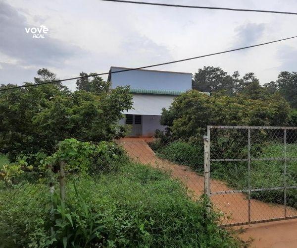 Bán nhà, vườn trái cây 2000m2 tại xã Xà Bang, Châu Đức, Bà Rịa Vũng Tàu