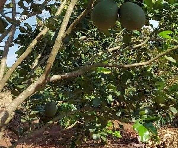 Bán vườn sầu riêng 10287m2, giá 6,17 tỷ tại Bảo Bình, Cẩm Mỹ, Đồng Nai
