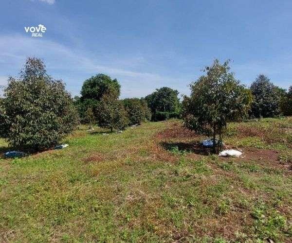 D004 - Bán vườn sầu riêng 4162m2, giá 2,7 tỷ tại xã Bảo Bình, Cẩm Mỹ, Đồng Nai