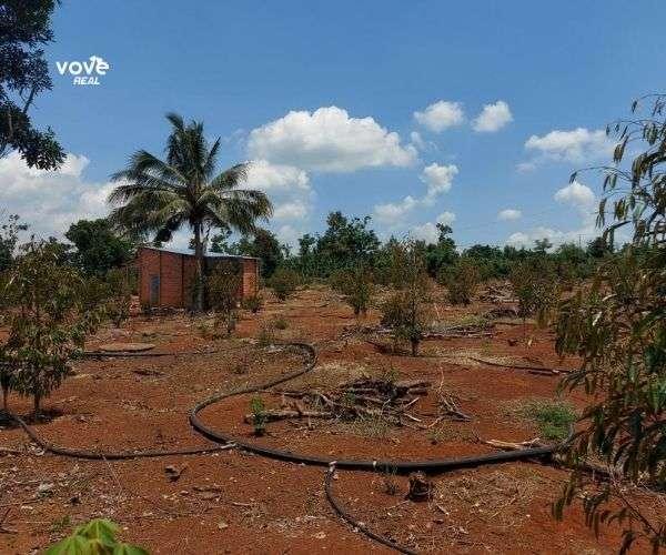 Bán vườn sầu riêng đẹp 9511m2 có thổ cư, đất đỏ đẹp, hạ tầng đầy đủ