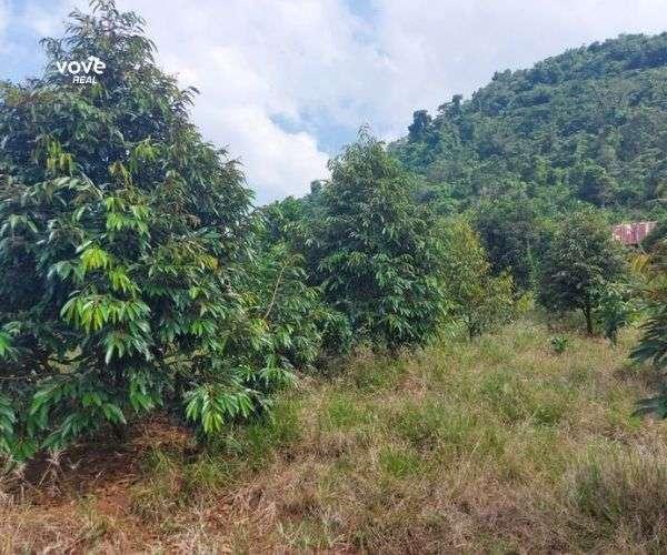 D011 - Bán vườn trái cây 16557 m2, tại vùng trái cây trù phú đặc thù Long Khánh tại Xã Nhân Nghĩa, Cẩm Mỹ, Tinh Đồng Nai