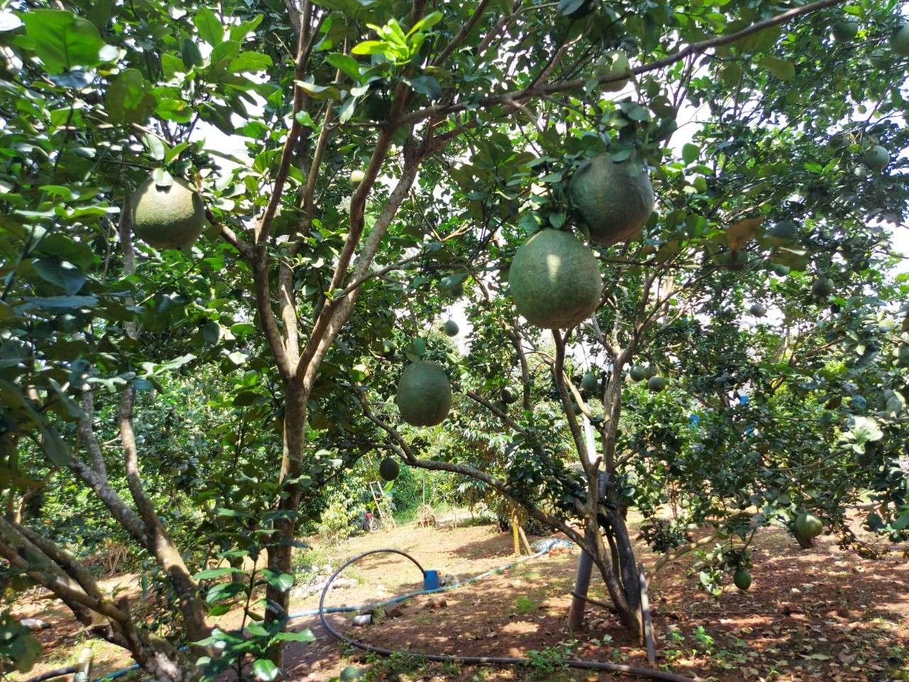 Bán vườn trái cây 5150m2 lưng tựa núi tại xã Nhân Nghĩa, Cẩm Mỹ, Đồng Nai