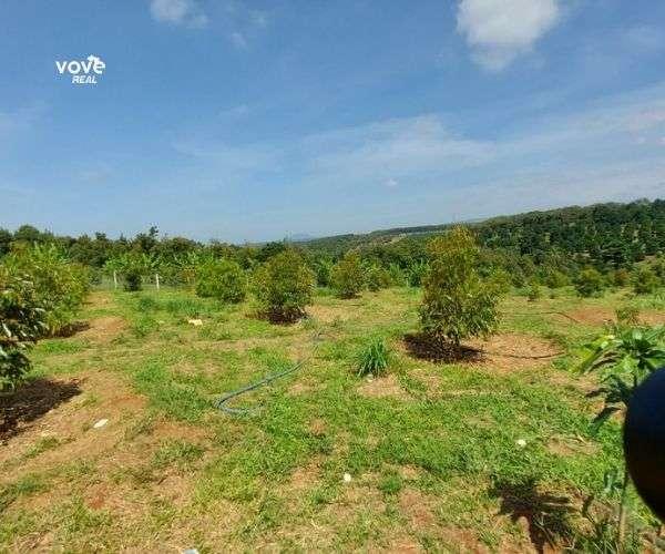 Bán vườn trái cây 8695m2 tại khu trái cây Long Khánh