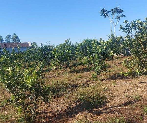 D029 - Bán nhà có vườn cây ăn trái 15665m2 ven hồ Cầu Mới, mặt tiền rộng, giá 18,8 tỷ tại Thừa Đức, Cẩm Mỹ, Đồng Nai
