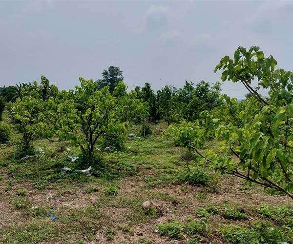 D035 - Bán trang trại trái cây 45369m2, có 600m2 thổ cư, 266m mặt tiền giá 23,6 tỷ tại Bảo Bình, Cẩm Mỹ, Đồng Nai