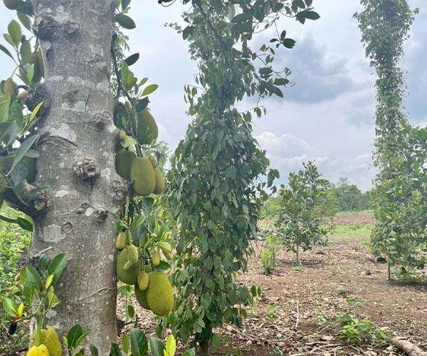 D037 - Bán nhà vườn đẹp 5825m2 mặt tiền đường nhựa giá 3.5 tỷ tại Xuân Tây, Cẩm Mỹ, Đồng Nai
