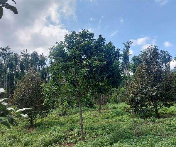 D053 - Bán đất có vườn cây ăn trái 13104m2, có 2 mặt tiền dài 320m giá 9.45 tỷ tại Cẩm Mỹ, Đồng Nai