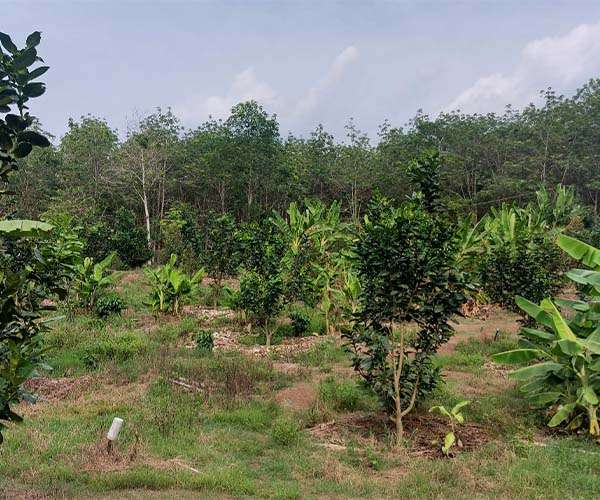 D046 - [NGHĨ DƯỠNG] Bán vườn trái cây tuyệt đẹp 7852m2 ven sân bay Long Thành, KCN Cẩm Mỹ, 2 mặt tiền rộng, suối lớn bao quanh giá 10.5 tỷ tại Thừa Đức, Cẩm Mỹ, Đồng Nai