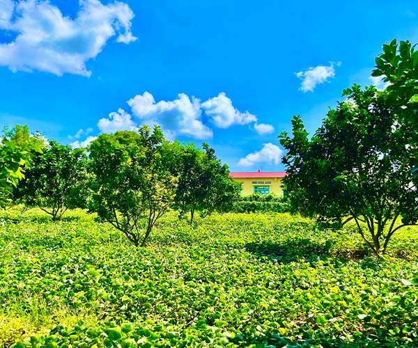 D057 - [GÓC ĐẦU TƯ ] Bán vườn trái cây 3890m2 sau lưng UBND xã Xuân Tây, ngay ngã tư đi QL1A, quy hoạch đất ở và sau đất có quy hoạch đường rộng 16m giá 1.95 tỷ rẻ nhất khu vực tại Cẩm Mỹ, Đồng Nai