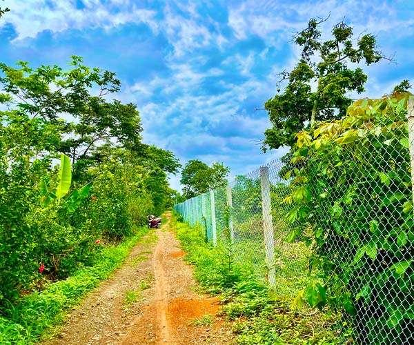 D059 - [ GÓC ĐẦU TƯ ] Bán vườn trái cây 5498m2 có 2 mặt tiền đường dài gần 200m, cách tỉnh lộ 764 chỉ 1.5km, giá 4.95 tỷ tại Xuân Tây, Cẩm Mỹ, Đồng Nai