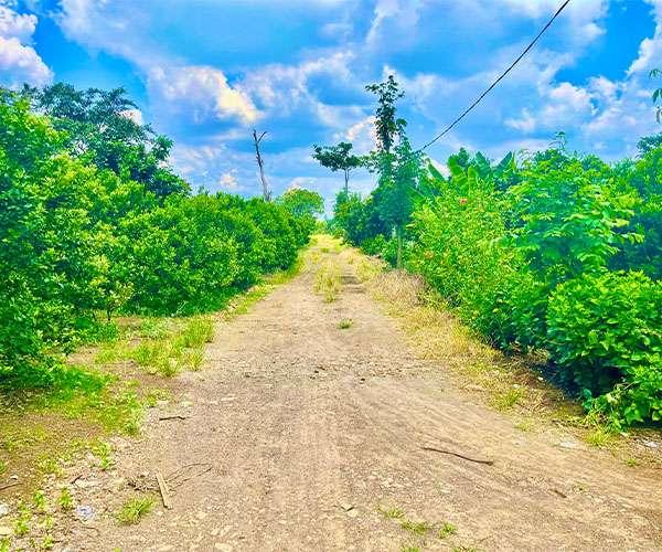 D072 -[ GÓC ĐẦU TƯ ] Bán vườn trái cây đủ loại 16664m2 có 150m mặt tiền, vị trí tiềm năng ngay mặt tiền dự án Hương Lộ 10 cách UBND xã, trường học chỉ 2.5km,  có 150m thổ cư giá 14 tỷ tại Xuân Tây, Cẩm Mỹ, Đồng Nai   VOVEREAL