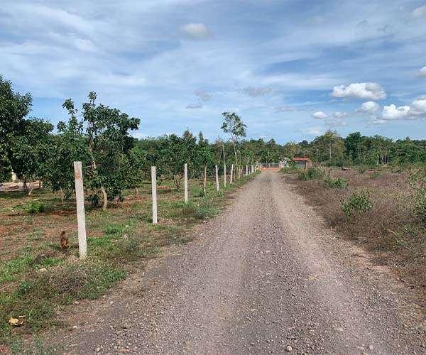 B122 - [GÓC ĐẦU TƯ ] Bán vườn trái cây đang thu hoạch năng suất cao 3362m2 có mặt tiền rộng đến 109m, gần khu nông nghiệp công nghệ cao giá 4.3 tỷ tại Xà Bang, Châu Đức, BRVT