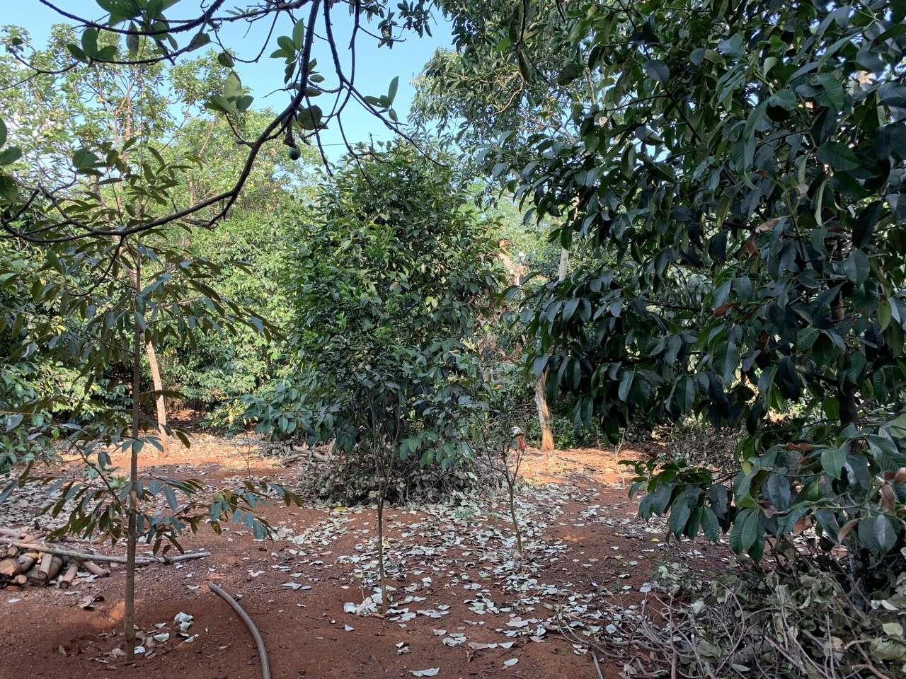 N007 - Bán đất có vườn cây ăn trái, có 3 mặt tiền, giá 2,5 tỷ tại Xà Bang, Châu Đức, BRVT | VOVEREAL