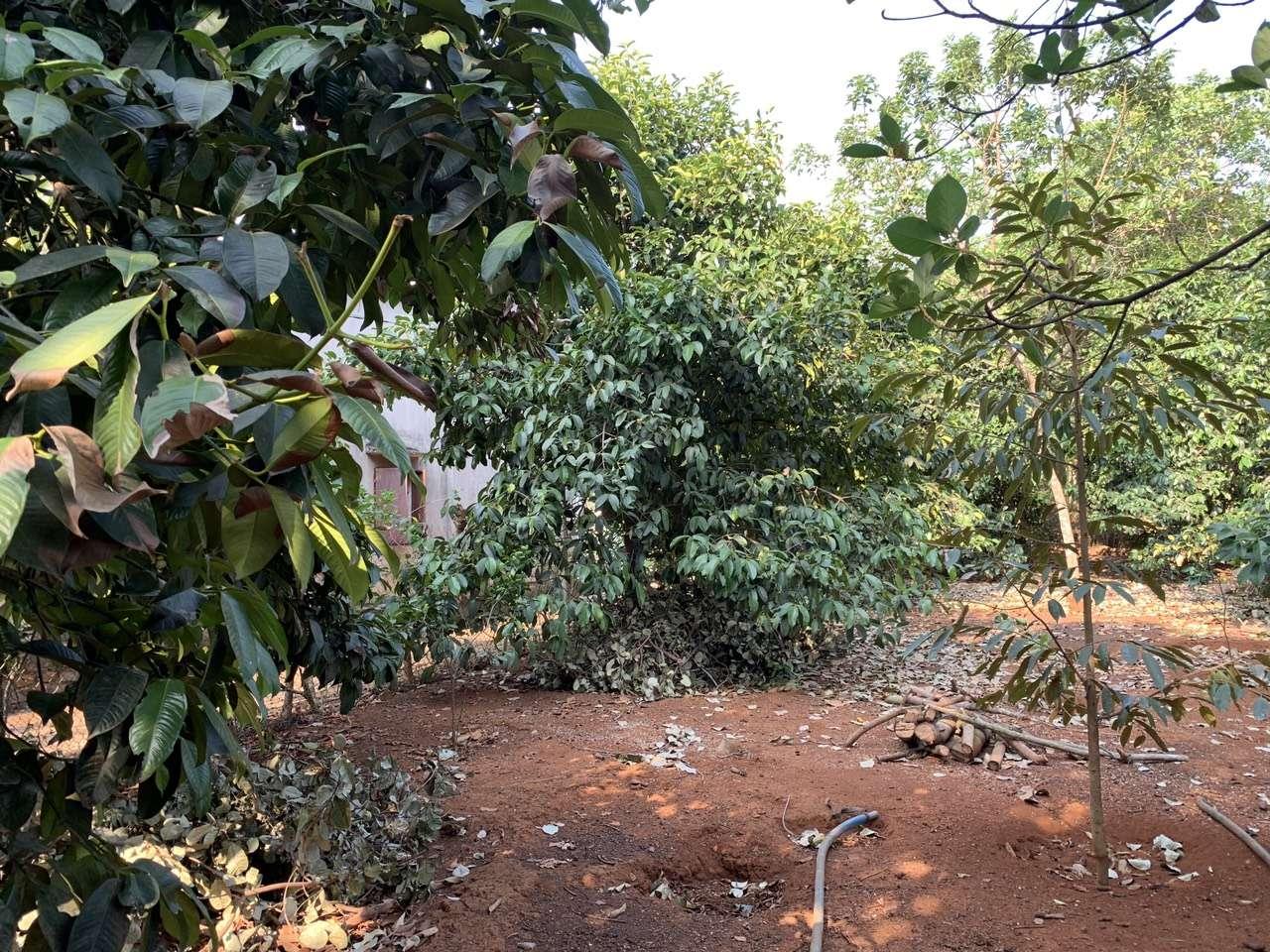N007 - Bán đất có vườn cây ăn trái, có 3 mặt tiền, giá 2,6 tỷ tại Xà Bang, Châu Đức, BRVT   VOVEREAL