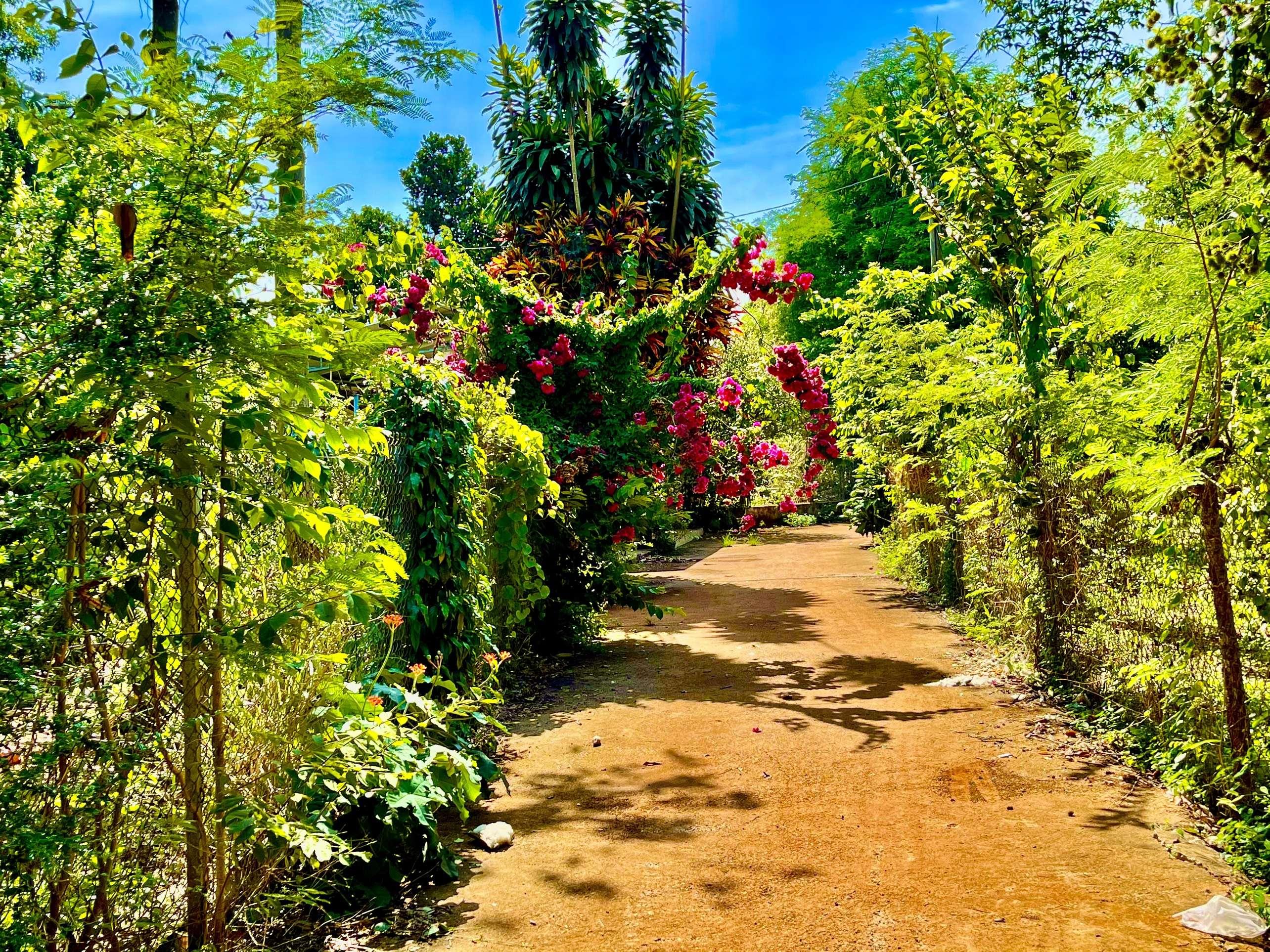 N011 - [ NGHĨ DƯỠNG ] Bán nhà vườn 2000m2 gần TP Long Khánh, mặt tiền đường bê tông, có sẵn nhà cấp 4 khang trang giá 2.2 tỷ tại thị trấn Long Giao, Cẩm Mỹ, Đồng Nai